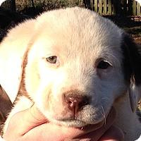Adopt A Pet :: Karma - Allentown, PA