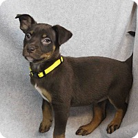 Adopt A Pet :: Glendale - Westminster, CO