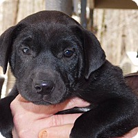 Adopt A Pet :: Peaches - Cranford, NJ