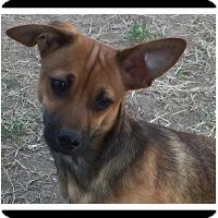 Adopt A Pet :: MASON - Winchester, CA