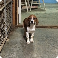 Adopt A Pet :: Walker - Dumfries, VA