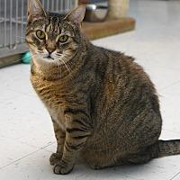 Adopt A Pet :: Aubrey - Oakland, NJ