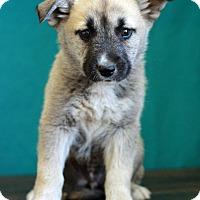 Adopt A Pet :: Kendall - Waldorf, MD