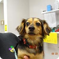 Adopt A Pet :: Lady Bug - Gulfport, MS