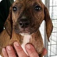 Adopt A Pet :: Emma Frost - Gainesville, FL