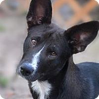 Adopt A Pet :: KENDALL - BROOKSVILLE, FL