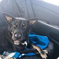 Adopt A Pet :: Helen - Toronto, ON