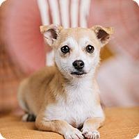 Adopt A Pet :: Seymour - Portland, OR