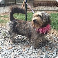 Adopt A Pet :: JULIA - Media, PA