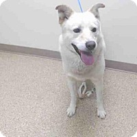Adopt A Pet :: *TRAPPER - Palmer, AK