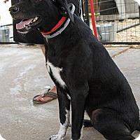 Adopt A Pet :: Miney - Leslie, AR