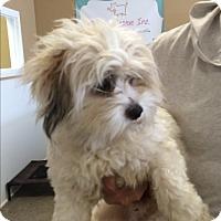 Adopt A Pet :: James - Thousand Oaks, CA