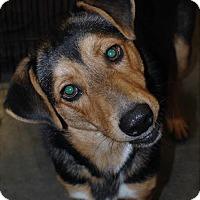 Adopt A Pet :: Able - Crowley, LA