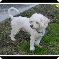 Adopt A Pet :: CURLY JOE - Winchester, CA