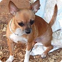 Adopt A Pet :: HELEN - Anderson, SC