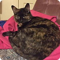 Adopt A Pet :: Faith - Whitewater, WI