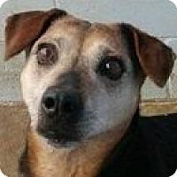 Adopt A Pet :: Griffey - Springdale, AR