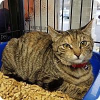 Adopt A Pet :: Nova - Jeannette, PA