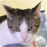 Adopt A Pet :: Nibbler - Naples, FL