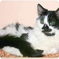 Adopt A Pet :: Pongo - Arlington, VA
