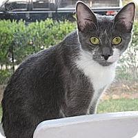Adopt A Pet :: Chloe Emily - Huffman, TX