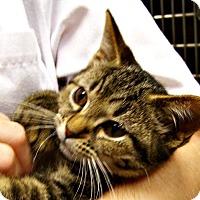 Adopt A Pet :: Susan - Toledo, OH
