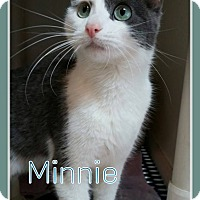 Adopt A Pet :: Minnie - Fairbury, NE