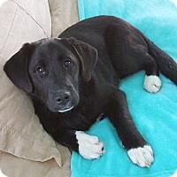 Adopt A Pet :: Casanova - Knoxville, TN