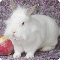 Adopt A Pet :: Clyde - Santa Barbara, CA