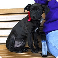Adopt A Pet :: Tizzy-Adopted! - Detroit, MI