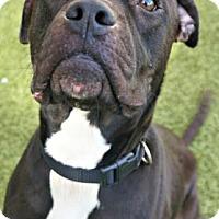 Adopt A Pet :: Bones - Titusville, FL