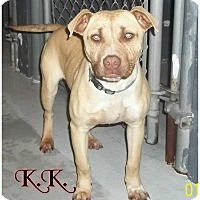 Adopt A Pet :: K.K. - muskogee, OK