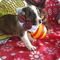 Adopt A Pet :: Houston - springtown, TX