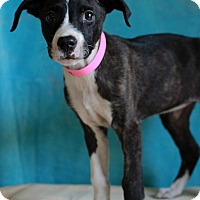 Adopt A Pet :: Alice - Waldorf, MD