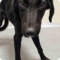 Adopt A Pet :: Remington - Plainfield, IL