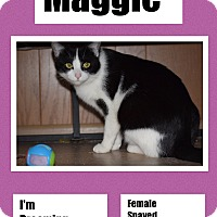 Adopt A Pet :: Maggie - CLEVELAND, OH