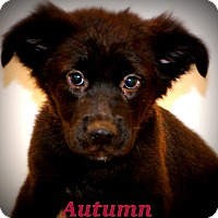 Adopt A Pet :: Autumn Grace~adopted! - Glastonbury, CT