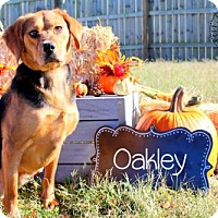 Adopt A Pet :: Oakley - Bardstown, KY