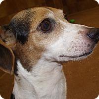 Adopt A Pet :: Shirley *Petsmart GB* - Appleton, WI