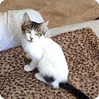 Adopt A Pet :: Tara - Bulverde, TX