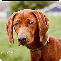 Adopt A Pet :: Stella - Urgent! - Zanesville, OH