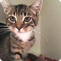 Adopt A Pet :: Vincent - Gainesville, FL
