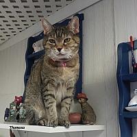 Adopt A Pet :: Thomasa - Brightwaters,, NY