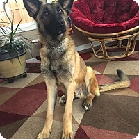 Adopt A Pet :: Reese - norridge, IL