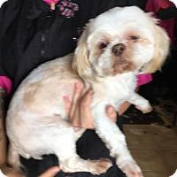 Adopt A Pet :: J.D. - Moreno Valley, CA