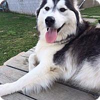 Adopt A Pet :: Jake and Bella - Allison Park, PA