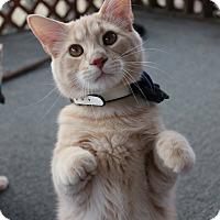 Adopt A Pet :: Prince - Winchester, VA