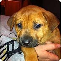 Adopt A Pet :: Ryder - Orlando, FL