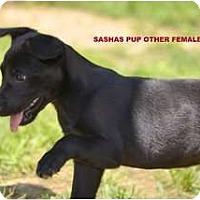 Adopt A Pet :: Bangles - New Boston, NH
