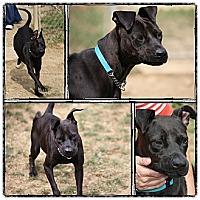 Adopt A Pet :: Jetta - South Park, PA